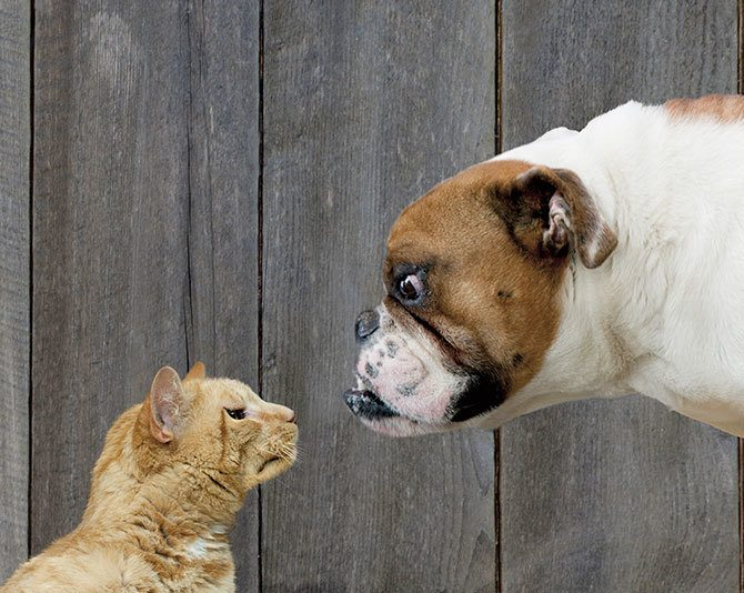 dogs or cats 1