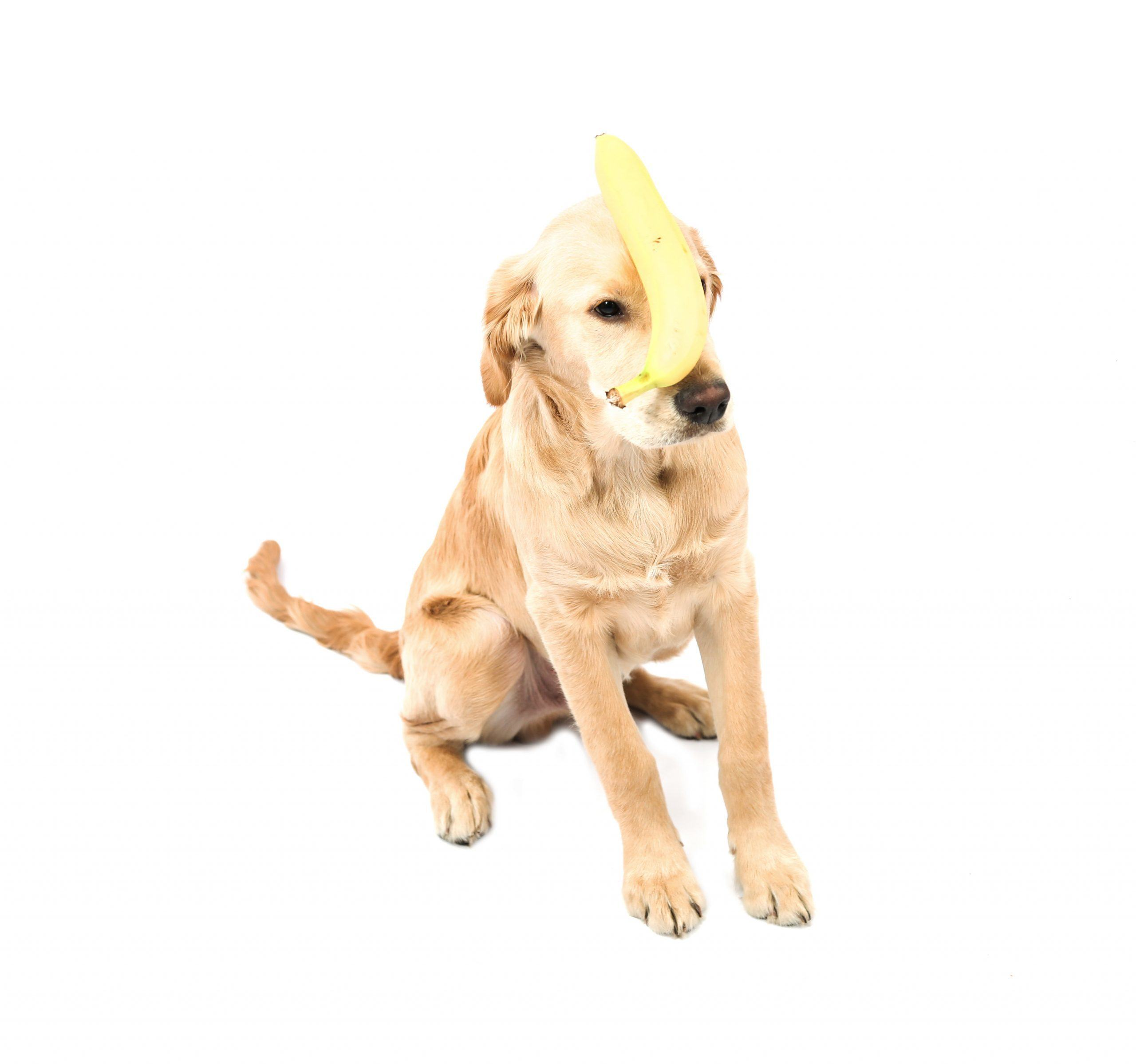 dog and a banana