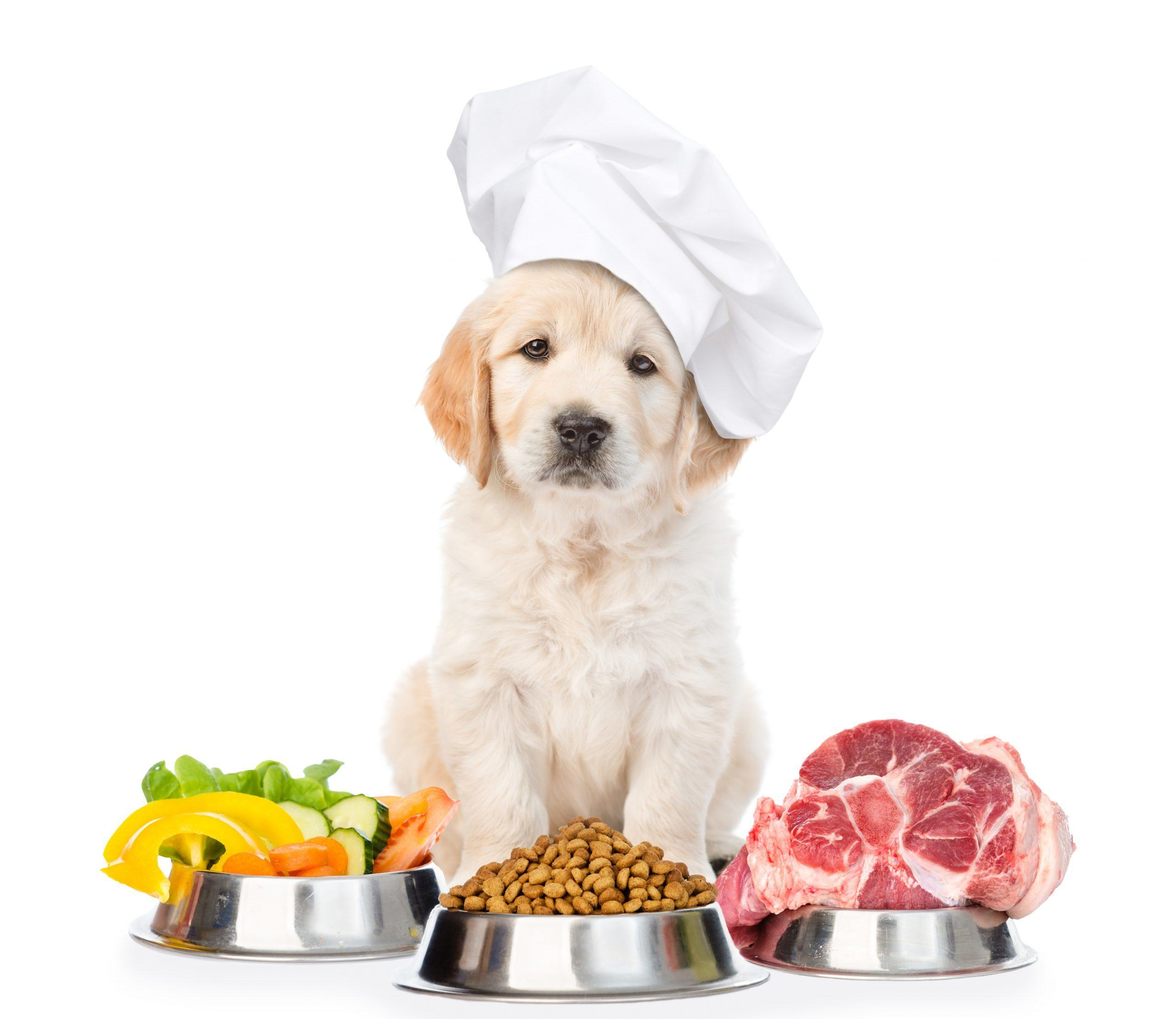 puppy baker