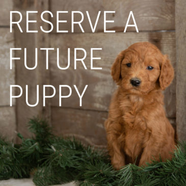 Early Litter Reservation